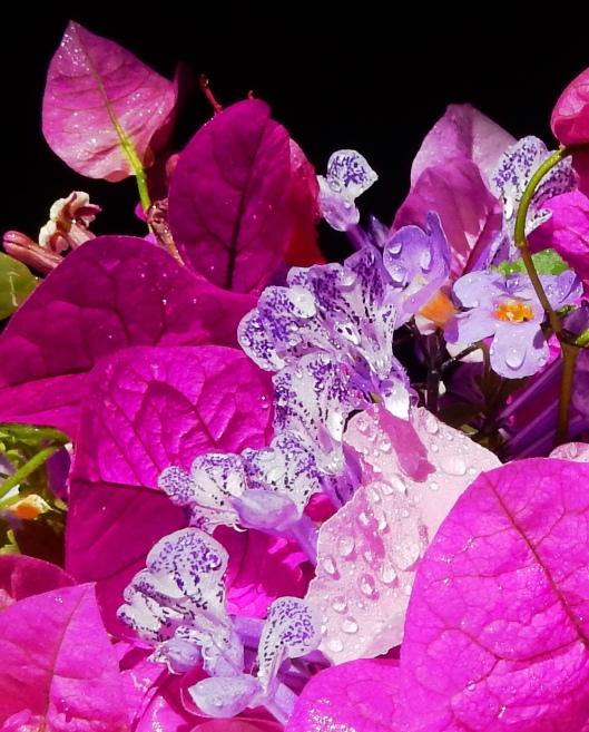 Purple Rain 032